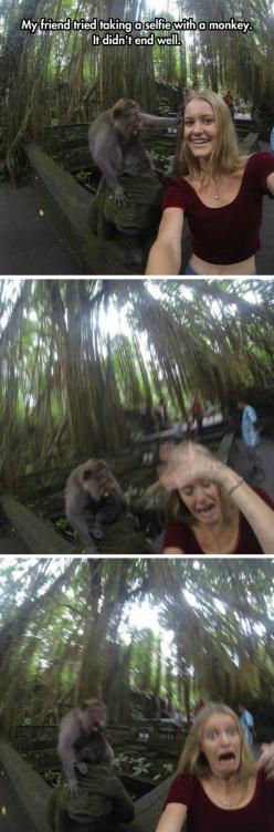 xD: Picture, Sooo Funny, Monkey Selfie, Monkey S Face, Funny Quotes, Humor, So Funny, Monkeys Face