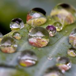 ღღ  Dew - The colors and reflections are so beautiful!: Water Drops, Color, Art, Raindrop, Dewdrops, Rain Drops, Beauty, Dew Drops