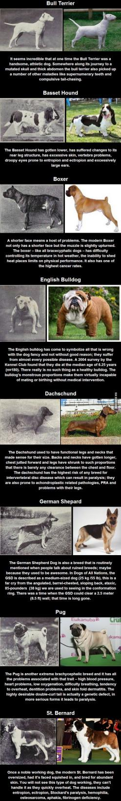 100 years of selective breeding...thank you to all you heartless breeders who really don't love dogs (or cats for that matter): Dogs, Poor Dog, Selective Breeding, Mutt Dog, Dog Breeds, Animal, 100 Years