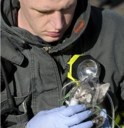 14. A firefighter giving a kitten oxygen: Picture, Cats, Animals, Hero, Oxygen, Firefighters, Kittens, Photo