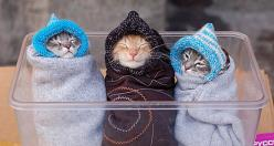 """Do you think we look ridiculous?"" said Fluffy. ""Who cares"" said Snowball, "" It's so warrrrmmm."" ""This is stupid"" said Larry.: Cats, Babies, Pet, Funny, Kittens, Baby Animals, Things, Kitties, Kitty"