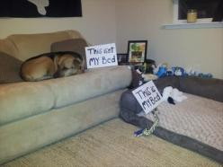 """This is not my bed... This is my bed."" ~ Dog Shaming shame - - Attack Of The Funny Dogs – 60 Pics: Funny Pets, Funny Animals, Beds, Dog Shaming, Funny Dogs, Funny Stuff, Dogshaming Favorites, Funnies"