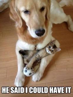 Adorable: Cats, Animals, Kitten, Friends, Sweet, Dogs, Pets, Funny, Adorable