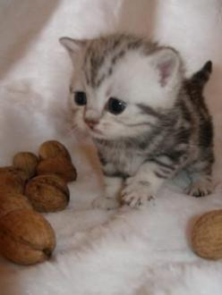 Adorable!!: Cats, Animals, So Cute, Pet, Kittens, Baby Kitty, Big Head