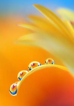 all-things-bright-and-beyootifu: Water Drops, Waterdrop, Color, Dewdrops, Yellow, Rain Drops, Dew Drops, Photo, Water Droplets