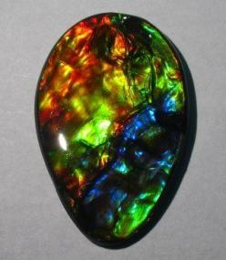 Ammolite is a rare and valuable opal-like organic gemstone. Category: fossilized, mineralized Ammonite shell.: Ammolite Gemstone, Fossilized Shells, Canadian Ammolite, Gemstones Jewelry, Gems Minerals, Minerals Gems Fossils, Dino S Gemstones Fossils, Beau