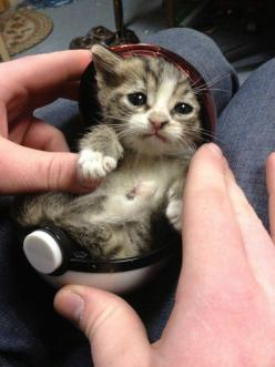 And this Poké-kitty who is almost a teeny bit too adorable. | 39 Adorable Pictures You Need To Stop And Look At Right This Second: Cats, Animals, Pokemon, So Cute, Pet, I Choose You, Kittens, Kitty