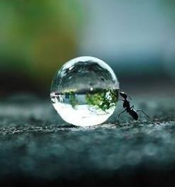 Ant pushing a water droplet. because, the ant has something to guard. people like this ant. people dedicate for precious. what's yours?: Picture, Nature, Ant Pushing, Ants, Dew Drops, Dewdrop, Photo, Water Droplets, Animal