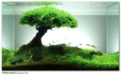 Aquascaping.......A Beginner's Perspective  Aquascaping has captured the eyes and imaginations of many. From the moment I saw pictures of various aquascapes I knew I wanted to create something like what I had seen.......: Stuff, Fish Tanks, Fishtanks,