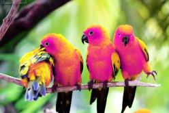 are these really this color? i want one..: Birds S Life, Animals, Color, Birdie, Sun Conures, Beautiful Birds, Bird Photography