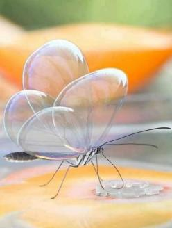 Beautiful Butterfly Bubble Wings - Most Beautiful Pictures: Animals, Butterflies, Nature, Beautiful, Photo