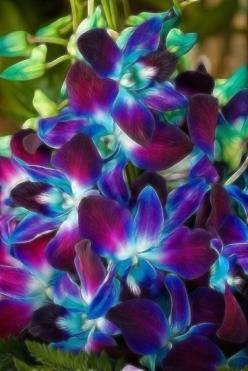 Beautiful Orchids: Purple Orchids, Coloured Orchids, Orchid Tattoo, Beautiful Orchids, Flowers, Favorite Flower