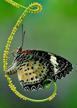Bev Murphy is using Pinterest, an online pinboard to collect and share what inspires you.: Beautiful Butterflies, Nature, Animal