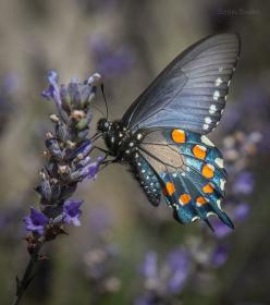 Blue Butterfly: Beautiful Butterflies, Animals, Butterflies Insects, Insects Bugs Butterflies