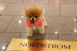 Boo-The worlds cutest dog. Angelina is in love with this puppy. She has two of the stuffed animals and his book. Really is the cutest dog ever.: Nordstrom, Boo Dog, Adorable Animals, Cutest Dogs, Awww Boo, Baby Dogs, Baby Animals, Stuffed Animal