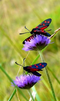 Butterflies, so many kinds, colors and habits, sort of like people, hmmm,: Beautiful Butterflies, Butterflies Dragonflies Moths, Butterflies Moths Dragonflies, Color, Flower