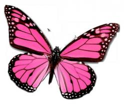 Butterfly Days - The Freedom We Take For Granted: Beautiful Butterflies, Pink Butterfly, Color, Pinkbutterfly, Art, Tattoo, Animal