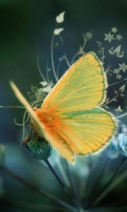 Butterfly #putdownyourphone #awesome #butterfly #beautiful nature #colour #amazing: Beautiful Butterflies, Animals, Quotes, Nature, Yellow Butterfly, Wallpapers, Beauty, Photo