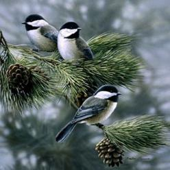 Chickadees...these birds weather the harsh Canadian winter cold...and cheer us up as they gather at birdfeeders. They eat berries on the trees.: Backyard Birds, Capped Chickadees, Beautiful Birds, Favorite Bird, Animal