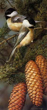 ~` chickadees `~  You can feed the chickadees right out of your hand at the Brecksville Metroparks during the winter.: Bird Paintings, Art Birds, Animals Birds, Beautiful Birds, Favorite Bird, Black Capped Chickadees