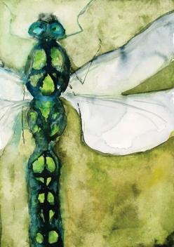 Dragonfly - by Roderick MacIver - Signed, Limited Edition Print: Sketch Book, Roderick Maciver, Heron Dance, Dragonfly Notecards, Limited Edition, Art Journaling, Dragonflies