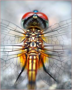 Dragonfly I pinned this for u hunni I know you love dragonflies: Dragon Flies, Macro Photography, Dragonfly Clarity, Close Up, Animal, Dragonflies