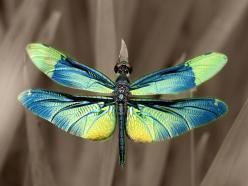 Dragonfly.  Rhyothemis fuliginosa.  by Kaz Watanabe.: Dragon Flies, Animals, Butterflies, Bugs, Beautiful, Photo, Dragonflies