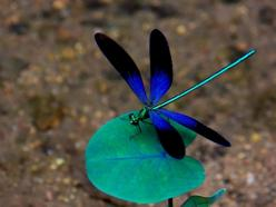 dragonfly screensavers – 1024×768 HD Wallpaper Dekstop, Background Wallpapers Download | Wallpaper HD Download Free Background: Blue Dragonfly, Dragon Flies, Wallpaper, Google Search, Photo, Animal, Dragonflies
