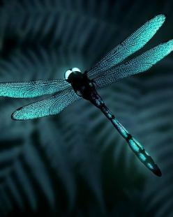 Earn money working from home! Check out this great work from home site - http://workfromhome-3hyv1fs6.myreputablereviews.com: Butterflies Dragonflies, Blue Dragonfly, Teal Dragonfly, Dragon Flies, Color, Dragonfly S, Animal
