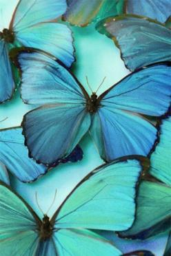 Goth:  #Corpse #Bride ~ Blue butterflies. When Emily's murder is finally avenged, she is released from her corpse bonds and metamorphoses into a cloud of butterflies.: Colour, Beautiful Butterflies, Blue Butterflies, Nature, Blue Butterfly, Color, Flu