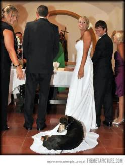 Hey, a bed's a bed, lady.: Animals, Dogs, Wedding Ideas, Weddings, Pet, Funny, Photo, Friend