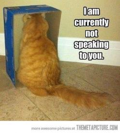 How to tell if your cat is mad at you…: Funny Cat Picture, Funny Cats, Crazy Cat, Funnies, Funny Animal, Kitty, Cat Lady