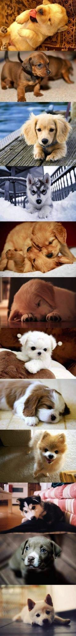 I love animal,i would take all of them,so cute!!!!!! We will add another soon enough!: Cutest Puppy, Cute Puppies, Dogs, Cute Puppy, Puppys, Baby Animal