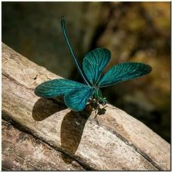 I love dragon flies: Dragon Flies, Butterfly, Butterflies, Dragonfly S, Greek Damselfly, Animal, Dragonflies