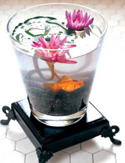 If you want to try this with a goldfish, consider a large enough vessel and filtration for the goldfish. Please see comments. NB as per a commentor, 5 gallons would not be enough. I urge anyone wanting to recreate this pin to consider the animal's hea