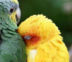Image detail for -Colorful cuddling birds | Curiosities By Dickens: Animals, Sweet, Snuggle, Parrots, Creatures, Things, Beautiful Birds