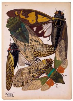 Insects Plate 2: Scientific Illustration, Nature, Bugs, Insect Art, Insects, Cicada