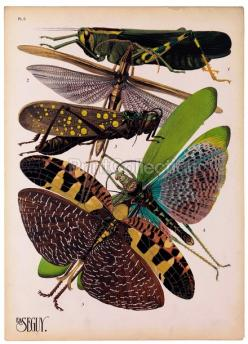 Insects, Plate 8: Art, Illustration, She, Insects