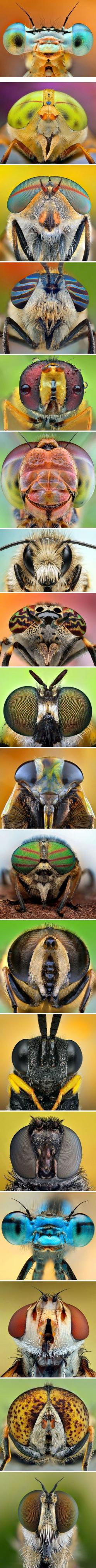 IPhotographer Ireneusz Irass Waledzik - collection of fascinating facet eyes of dragonflies, bees and flies.: Facet Eyes, Watercolor Project, Macro Photography, Insects And Bugs, Amazing Eyes, Insect Face, Animal