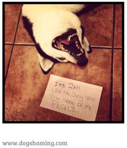 It's 2AM LET ME SING YOU THE SONG OF MY PEOPLE! #dogshaming http://www.youmustlovedogsdating.com: Animals, Dog Shaming, Pet, Husky, People