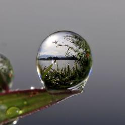 Life belongs to the flexible, to one who can move from extroversion to introversion and from introversion to extroversion as easily as you move outside and inside your house  ~ Osho: Photos, Nature, Beautiful, Dew Drop, Raindrop, Dewdrop, Photography, Rai