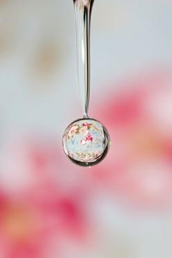 Looking for a fun activity to try? Photographing water droplets can spark your creativity. Have you ever tried or do you want to now?: Water Drops, Droplet Macro, Macro Photography, Photography Tip, Amazing Water, Droplets Tutorial, Photographing Water, W