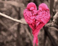 ♡Love bird: Animals, Nature, Pink Heart, Beautiful, Valentine, Birds, Pink Bird