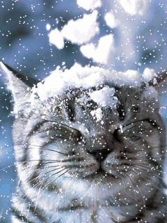 Lovely blue setting behind the white tiger cat being unappreciative of the snow chunks falling on his head. DdO:) MOST POPULAR RE-PINS - http://www.pinterest.com/DianaDeeOsborne/big-cats-little-cats/ - BIG CATS LITTLE CATS  (Was this a two-person effort -