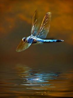 Nice Pic #photos, #bestofpinterest, #greatshots, https://facebook.com/apps/application.php?id=106186096099420: Butterflies Dragonflies, Spirit Animal, Life, Dragonfly Dreams, Dragonfly Totem