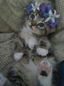 Ok, I'm not a Kat person but how cute is this little girl!!: Kitty Cats, Animals, Sweet, Flower Crowns, Cute Kittens