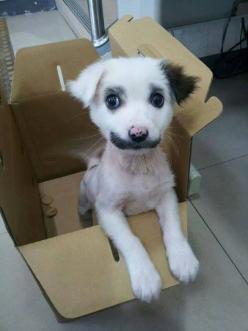 OKAY THERE IS A LOT TO TAKE IN ABOUT THIS PHOTO OF AN AMAZING DOG.   This Amazing Dog With A Mustache Deserves Your Complete Attention: Animals, Moustache, Dogs, Pets, Puppys, Puppy, Funny Animal, Mustache, Friend