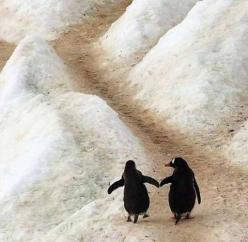 penguins. holding flippers: Penguin Love, Hand, Animals, Friends, Penguins, Things, Photo, Walk, Birds