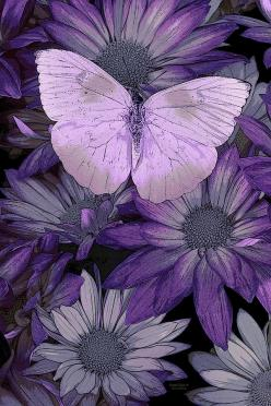 Purple Butterfly Painting by Darrell Gulin - Purple Butterfly Fine Art Prints and Posters for Sale: Butterflies, Jq Licensing, Art Prints, Butterfly Painting, Purple Butterfly, Fine Art, Purple Passion, Color Purple, Flower