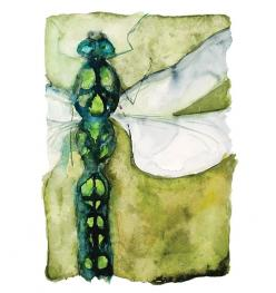 Roderick MacIver   WATERCOLOR: Sketch Book, Roderick Maciver, Heron Dance, Dragonfly Notecards, Limited Edition, Art Journaling, Dragonflies